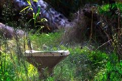 Verlaten overwoekerde fontein van drinkwater royalty-vrije stock foto's