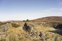 Verlaten ruïnes van schapenpennen op Dava Moor in Schotland royalty-vrije stock afbeelding