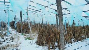 Verlaten serre in de winter Bevroren die oogst door sneeuw wordt behandeld stock videobeelden