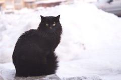 Verlaten straatkatten, dierlijk misbruik, droefheid stock foto's