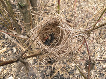 Verlaten vogel 's nest Stock Foto