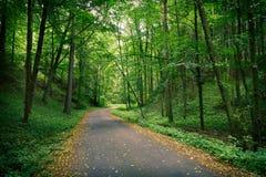 Verlaten weg in een donkergroen bos stock fotografie
