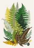 Verlatervarens samenstelling Vector botanische uitstekende illustratie Royalty-vrije Stock Foto
