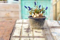 Verlegen Sie Stuhlsandsonnenlichtes des Lavendels des Caféstrandseeblumenvase romantische Weinlesewurzel des blauen weißen purpur Stockbilder