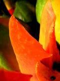 Verleidende Papaja royalty-vrije stock fotografie