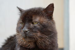 Verletzte Katze mangels der Behandlung Stockbild