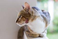 Verletzte Katze und frische Verletzung auf Gesicht Stockfoto