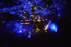 Verlicht Bos bij Nacht Royalty-vrije Stock Foto's