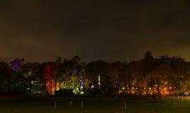 Verlicht Bos bij Nacht Stock Afbeelding
