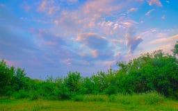 Verlicht door zonneschijnsteeg in bergbos Stock Fotografie