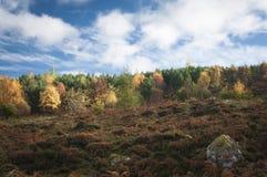 Verlicht gemengd bos Stock Afbeeldingen