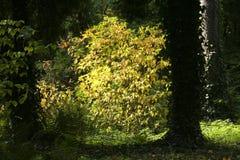 Verlichte bladeren in park Stock Fotografie