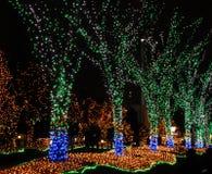Verlichte bomen Stock Afbeelding