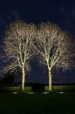Verlichte bomen bij nacht Royalty-vrije Stock Afbeeldingen