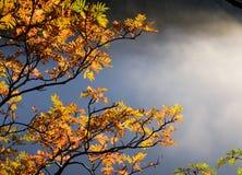Verlichte boom Stock Afbeelding