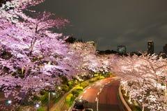 Verlichte Kersenbomen langs de straat in Tokyo Uit het stadscentrum, minato-Ku, Tokyo, Japan in de lente stock foto's
