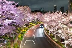 Verlichte Kersenbomen langs de straat in Tokyo Uit het stadscentrum, minato-Ku, Tokyo, Japan in de lente van, 2017 royalty-vrije stock foto's