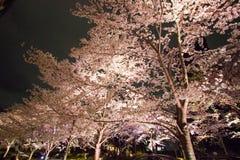 Verlichte Kersenbomen in Tokyo Uit het stadscentrum, minato-Ku, Tokyo, Japan in de lente van, 2017 royalty-vrije stock fotografie