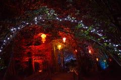 Verlichte Lantaarns en Bomen Royalty-vrije Stock Afbeeldingen