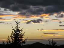 Verlichte wolken bij zonsondergang met een donkere neer boom Royalty-vrije Stock Foto's