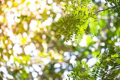 Verlichting van de achtergrond van de de bladerenboom van de ochtendklap royalty-vrije stock afbeelding