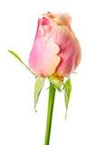 Verlieren Sie oben vom abstrakten romantischen schönen gelben und rosa Rosenfluß Stockbild