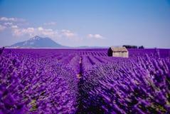 Verloren auf dem Lavendelgebiet - Valensole, Frankreich - so violett! stockbild