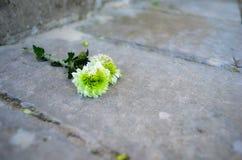 Verloren bloem royalty-vrije stock afbeelding