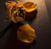 Verloren bloemblaadjes Royalty-vrije Stock Foto's