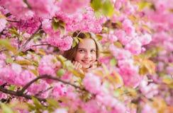 Verloren in bloesem Tedere bloei Meisjestoerist het stellen dichtbij sakura Kind op roze bloemen van de achtergrond van de sakura stock afbeeldingen