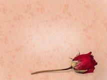 Verloren de liefde langzaam verdwenen nam achtergrond toe Stock Foto