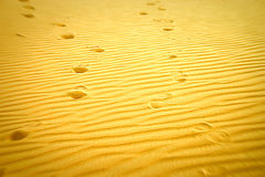 Verloren in der Wüste Stockbild