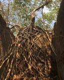 Verloren fort Royalty-vrije Stock Fotografie