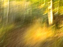 Verloren in het hout Royalty-vrije Stock Foto's