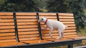 Verloren hond onder regen stock video