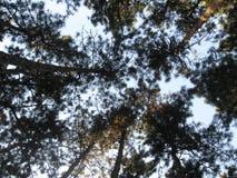 Verloren im Wald lizenzfreies stockbild