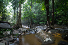 Verloren im Wald Stockfoto
