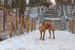 Verloren meelijwekkende hond stock afbeelding