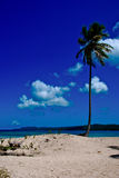 Verloren palmtree Royalty-vrije Stock Foto's