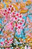 verloren sakura stock foto's