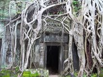 Verloren Stad van Angkor Wat stock foto's