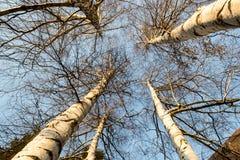 Verloren tussen bomen Royalty-vrije Stock Afbeeldingen
