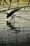 Verloren veer over een rivier bij zonsondergang royalty-vrije stock fotografie