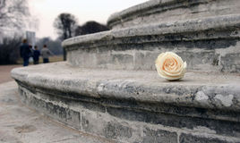 Verlorene Blume. Lizenzfreie Stockfotografie