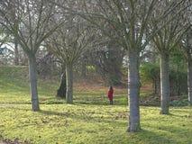 Verlorene im Wald - Wälder um Paris, Frankreich Stockbild