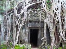 Verlorene Stadt von Angkor Wat stockfotos
