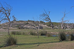 Verlorener Baum Stockfotos