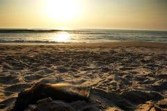 Verlorener Fischer ` s Stiefel auf dem Strand stockfoto