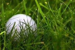 Verlorener Golfball stockfoto