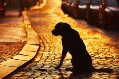 Verlorener Hund Stockbild